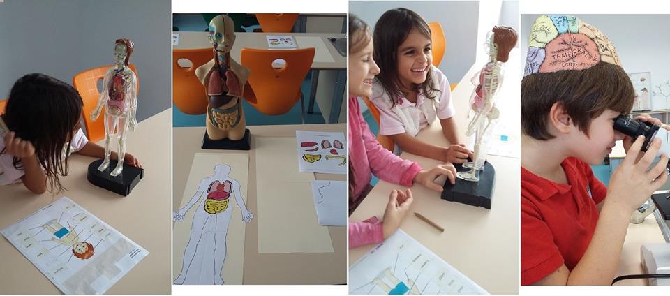 Corpul uman pe înțelesul celor mici (3-5 ani)