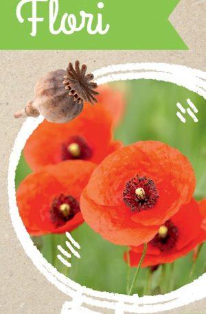 Micul Biolog – Flori